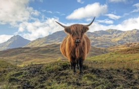 Whiskyreis Schotland