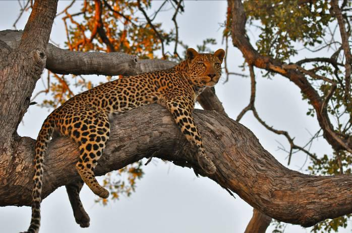 South Luangwa National Park 2