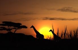 Exclusive AirCruise door Afrika