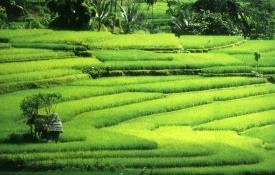 Highlights of Bali
